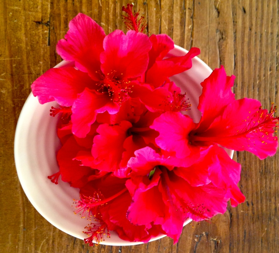 Hibiscus foraged from our front yard