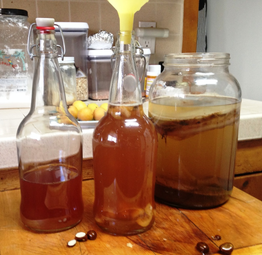 This morning I made loquat kombucha