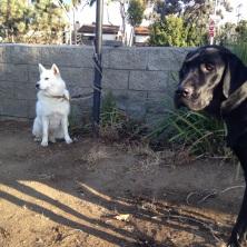 White & Black Dogs at Venice Farmers Market