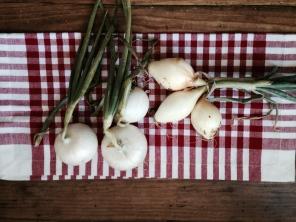 Spring & Walla Walla Onions