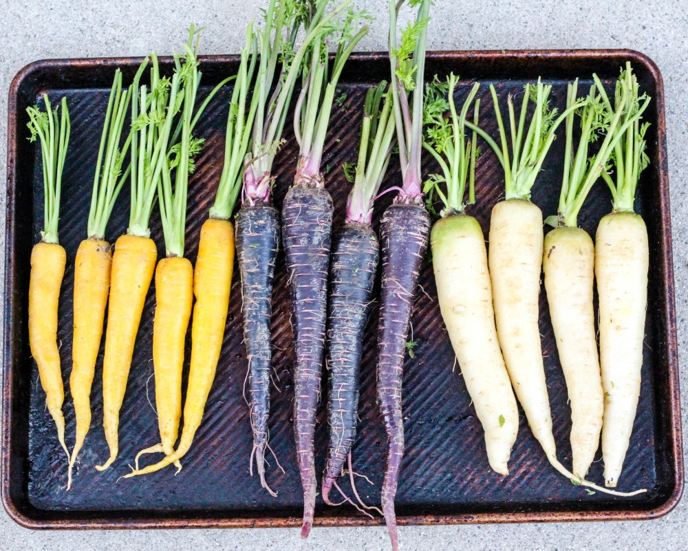 Carrots (1 of 10)