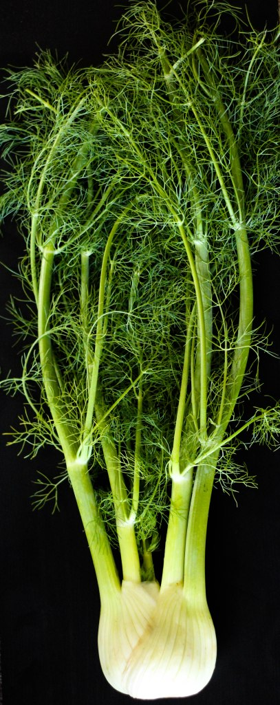 fennel (2 of 5)