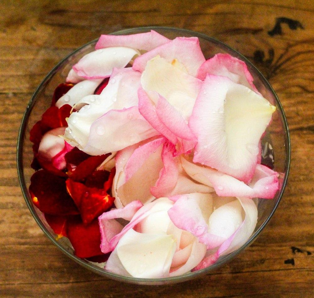 rose petals (12 of 21)