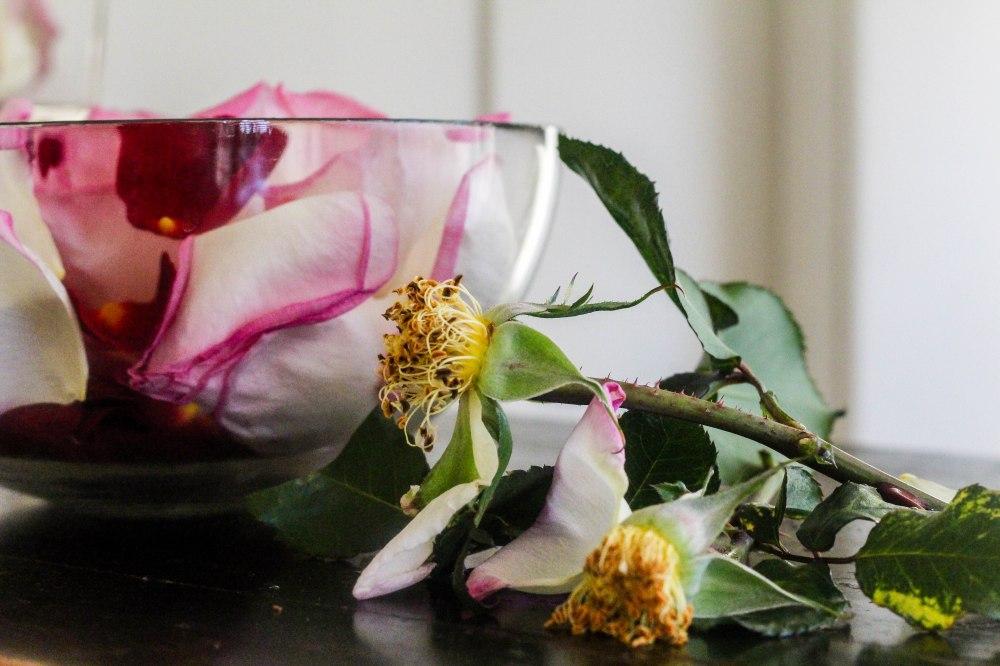 rose petals (2 of 21)